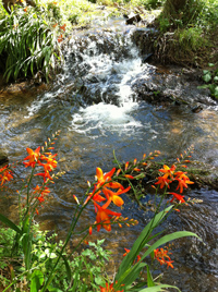 The stream that runs alongside our house... heavenly!