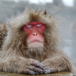 How to conquer your monkey brain and calm your world