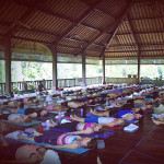 Allow the Giant to Emerge: A Review of a Power Living Yoga Retreat