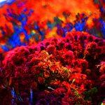 psychedelic drugs yoga spiritual